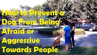 How To Prevent A Dog From Being Afraid Or Aggressive Towards People