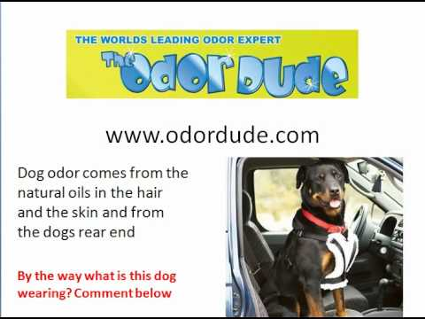 How to remove dog odor from untreated wood
