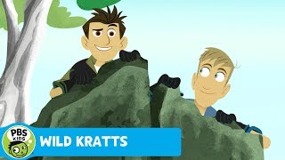 Wild Kratts: Power in Numbers thumbnail