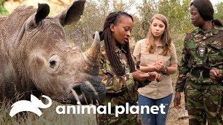 El trabajo de las Mambas Negras para proteger a los rinocerontes | Los Irwin | Animal Planet