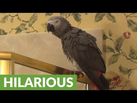 Parrot loves to eat corn, is extremely vocal about it