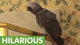 parrot-loves-to-eat-corn-is-extremely-vocal-about-it