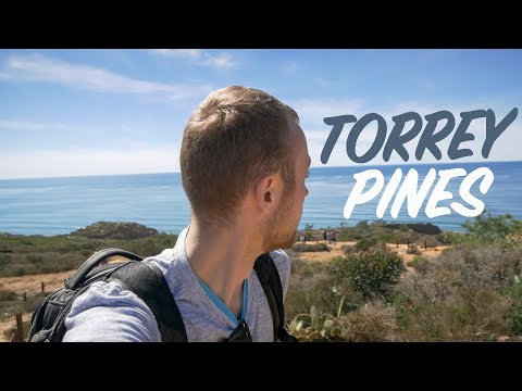 Things To DO IN SAN DIEGO; Go HIKING In Torrey Pines!