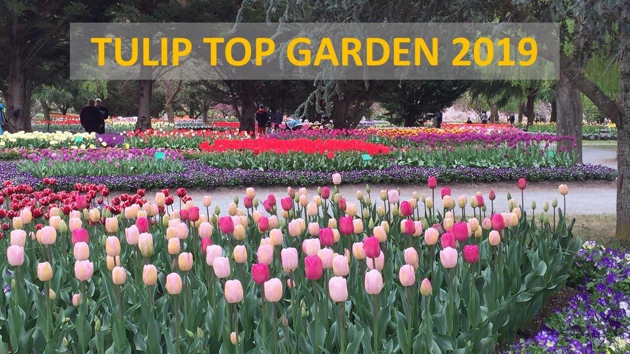 maxresdefault - Tulip Top Gardens 2019 Tulip Top Gardens 5 October