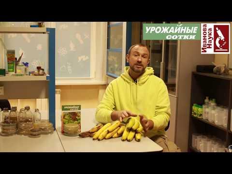 Можно ли бананы диабетикам? Вред и польза бананов. Как правильно есть бананы?
