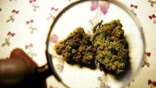 Způsobuje užívání marihuany zdravotní problémy?
