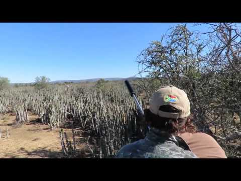 Oryx Hunting In Africa