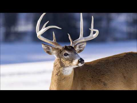 What Southeast Minnesota Hunters Need To Know About CWD Testing