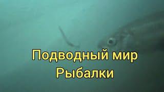 Подводный мир рыбалки Как же реагирует рыба на блесну Сахалинская рыбалка Sakhalin fishing