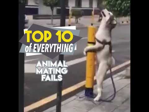 10 animal fails video || mating fails video