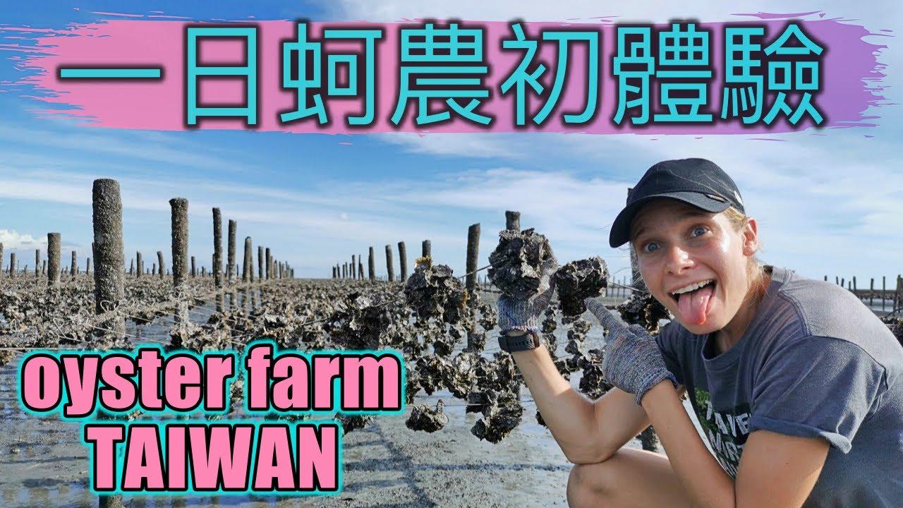 一日蚵農初體驗, 俄羅斯女孩的第一次 !! Being an oyster farmer in Taiwan, Changhua| 探索蚵仔的生長過程!! 搭著牛車下田去| 家庭旅遊首選| 彰化芳苑