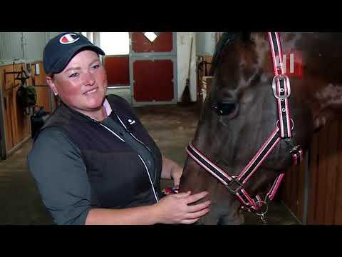 Новости конного спорта 30.09.19