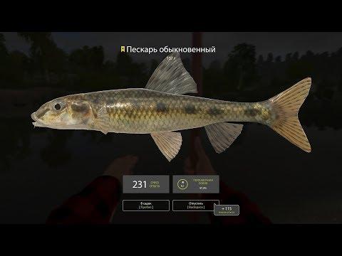 Русская Рыбалка 4 - Пескарь и Елец (Рекорд - Ерш Носарь) Р. Вьюнок ((4K))
