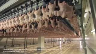 المراعي | مراحل تجهيز #دواجن_اليوم Almarai | ALYOUM Chicken