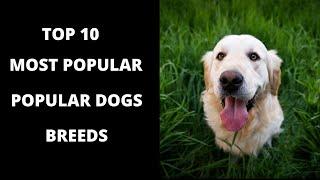 Shetland Sheepdog Top 10 Most Popular Dog Breeds Interesting Facts About Dog Breeds.