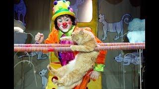 """""""Мой папа – клоун с кошками"""" Театр Кошек и дочь Куклачева  художница Екатерина"""