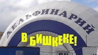 Дельфин-Шоу в Бишкеке!