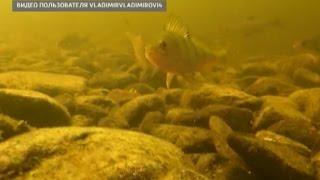 Невозмутимый велосипедист, нападение собак, видео со дна реки(ГТРКВологда #ВО35 #событиянеделиgtrk35 https://www.youtube.com/channel/UCiFGc3Wa7BDV1FJgxQpqKeQ https://vk.com/gtrk35 ..., 2016-08-22T06:29:58.000Z)