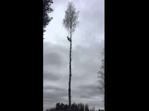 Avancerad Trädfällning i Nora AB #1