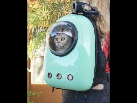 Почему кошки  не полетят в космос/Why Cats Will Not Fly Into Space