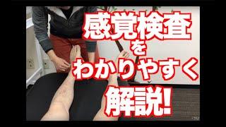 【TAP Academy】Vol 10 多和田 真希 先生「ケースレポート作成対策〜感覚検査について〜」