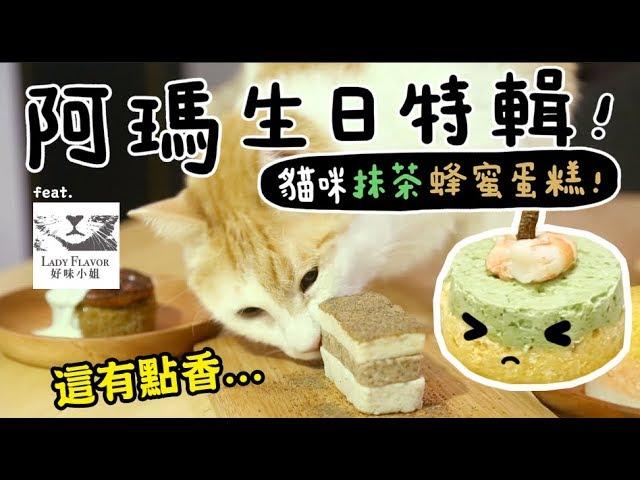 黃阿瑪的後宮生活-阿瑪11歲生日特輯-貓吃的抹茶蜂蜜蛋糕-ft-好味小姐