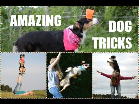 Amy's Amazing Dog Tricks