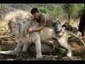 INTENTA NO LLORAR. AMISTADES HUMANOS Y ANIMALES, leones, tigres, monos, gatos, perros