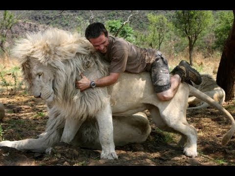 TRY NOT TO CRY. HUMAN AND ANIMAL FRIENDSHIPS, lions, tigers, monkeys, cats, dogs