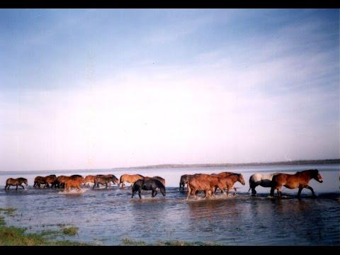 Sunja - posavski konj