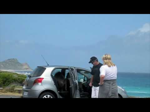 Baboons attack inside the car - Cape of Good Hope
