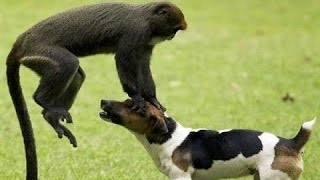 Pakistan Funny Clip  - Funny Monkey Videos