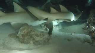 Shark night dive MV Orion Maldives GoPro silver hero 4
