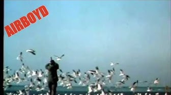 Frightening Techniques For Airfield Bird Control (1986)