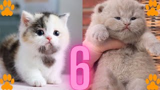 OMG So Cute Cats ♥ Best Funny Cat Videos 2021#6