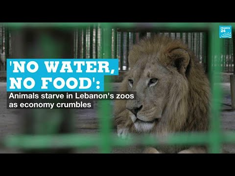 'No water, no food': Animals starve in Lebanon's zoos as economy crumbles