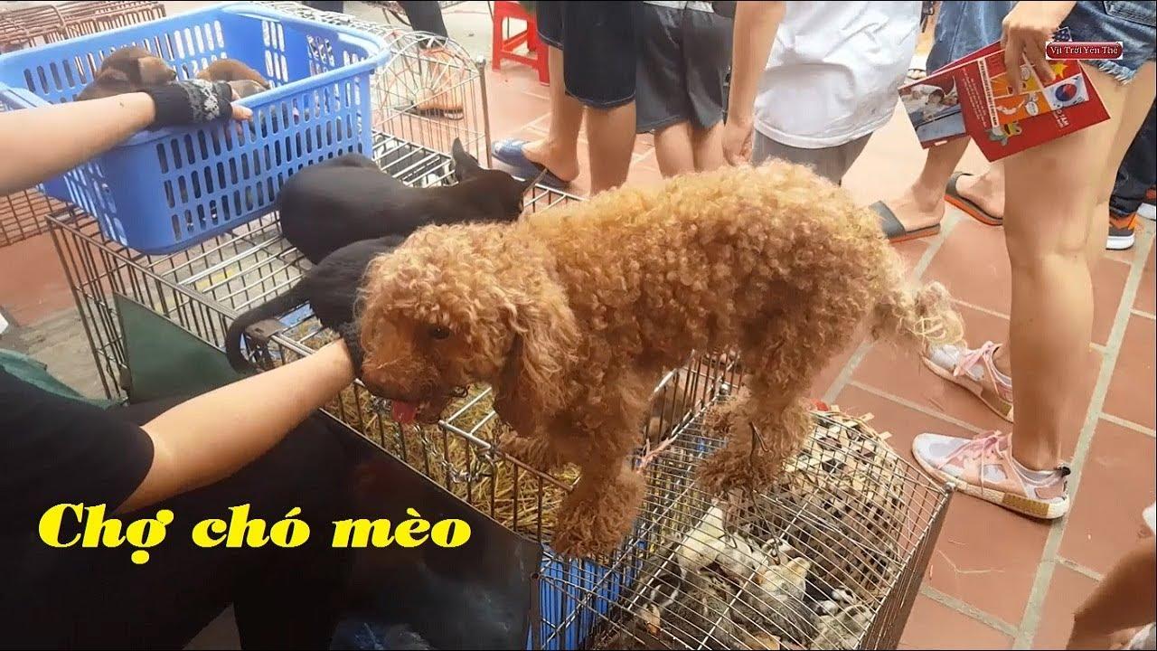 Chợ bán chó mèo cảnh thú cưng rẻ và đẹp mới nhất