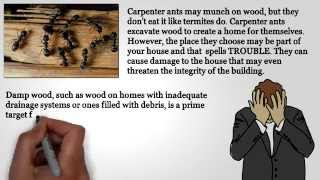 Signs Carpenter Ants are Present in Your Home