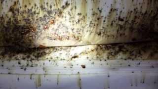 Utah Bed Bugs Extermiman