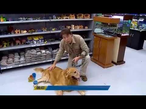 Se Liga Brasil: Aprenda A Escolher O Cachorro Ideal Para O Seu Lar