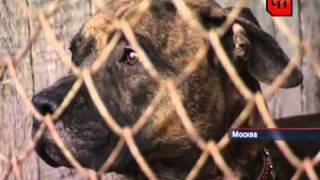 Девушка спасла пса от гибели. /Girl rescued the dog from extinction./
