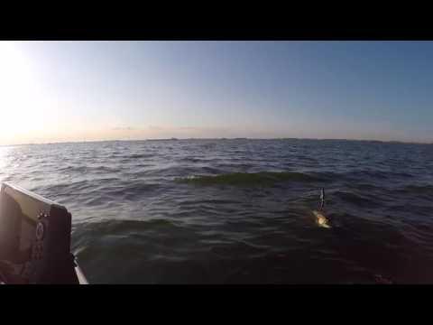 Big pike lake Volkerak