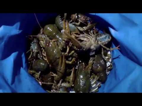 Ловим раков. Ставим раколовки на 7 дней. Рыбалка в Тамбове. Поймали ондатру. Royal Fish Tambov. 2018