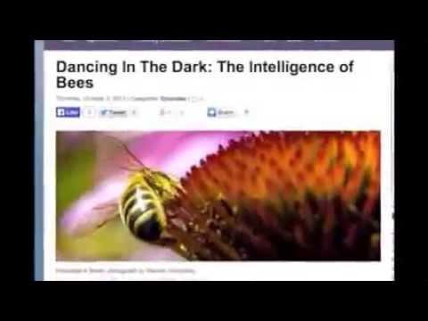 hqdefault - Les mauvaises réactions du corps au miel