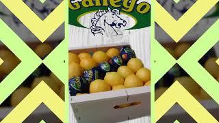 Agriocitricos Hermanos Gallego Sl .