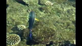 Представь себя рыбой(Весна на пороге... а значит самое время планировать летний отдых! Приглашаем всех наших друзей и знакомых,..., 2013-03-05T11:59:39.000Z)
