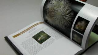 Tillandsia Ⅱ by Paul T.Isley Ⅲ:Flower Shop Eguchi