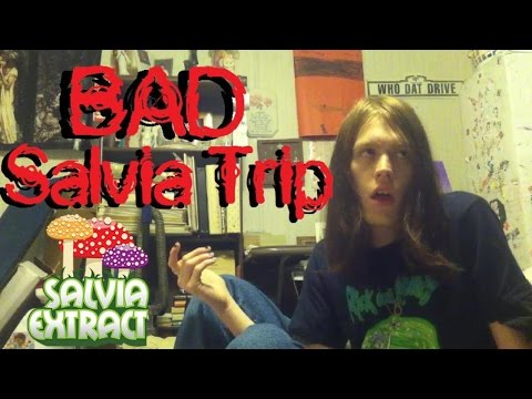 Salvia 25x (Live Trip Report)