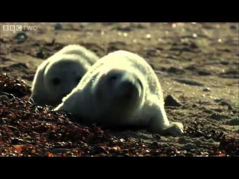 Ewan McGregor duces Hebrides  Islands on the Edge   BBC Two