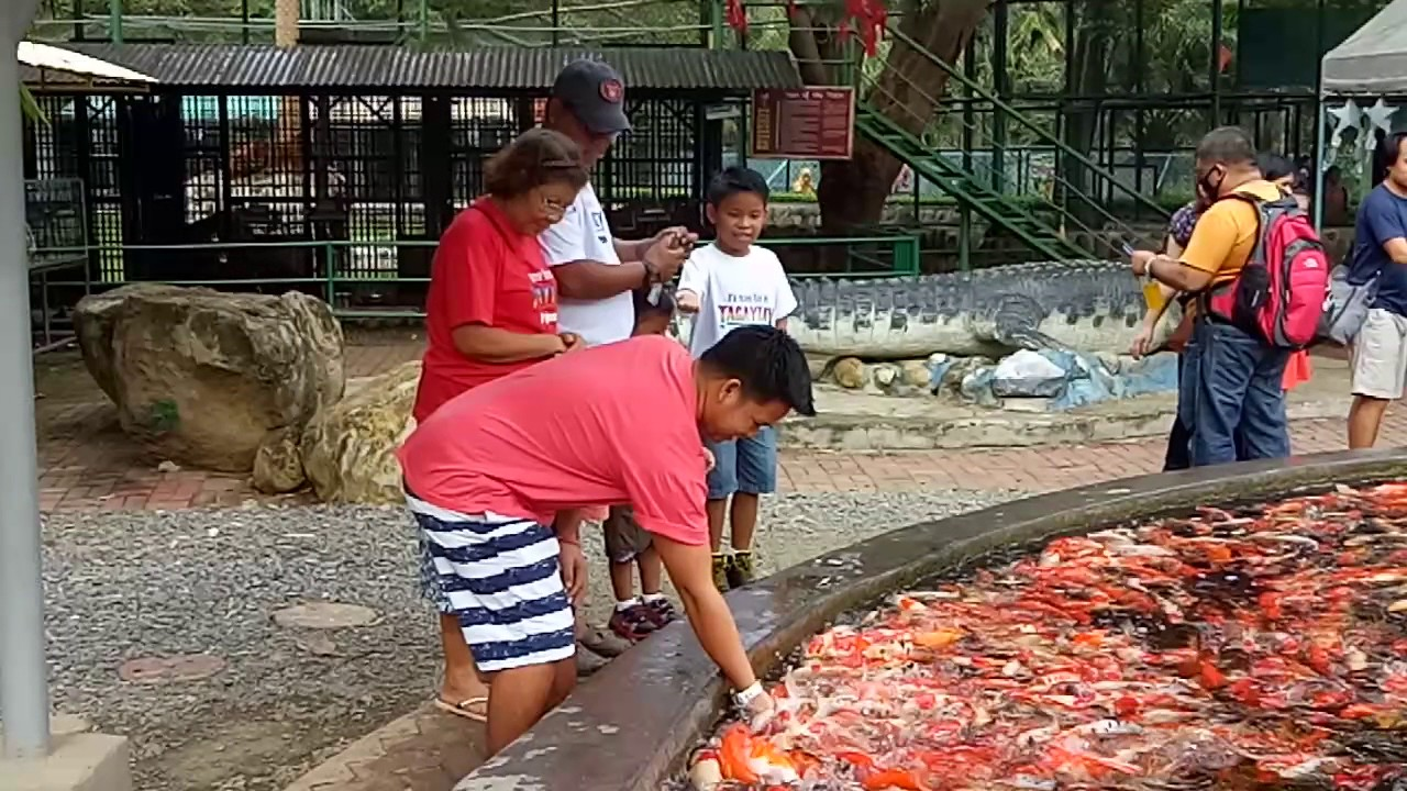 Koi fish pond in crocodile park davao city youtube for Koi pond quezon city